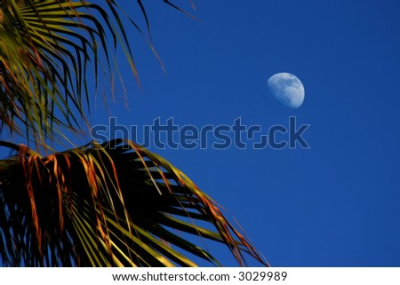 Palm tree with the moon - stock photo