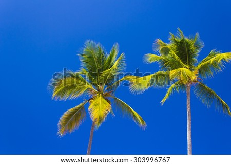 Palm trees against a brilliant clear blue sky - stock photo