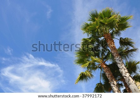 palm trees against a pretty blue sky - stock photo