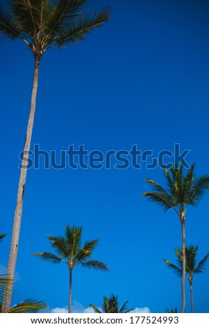 palm trees against blue sky with the little moon in the caribbean  - stock photo