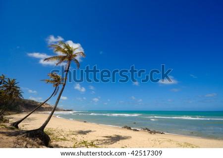 Palm trees and a beautiful beach at Praia do Amor near Pipa Brazil - stock photo