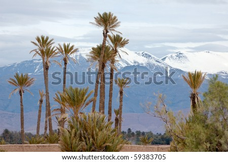 Palm trees and atlas mountain after snowing - stock photo