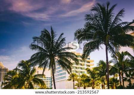 Palm trees and buildings in Miami Beach, Florida. - stock photo