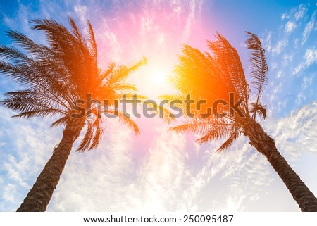 Palm trees and sky - stock photo