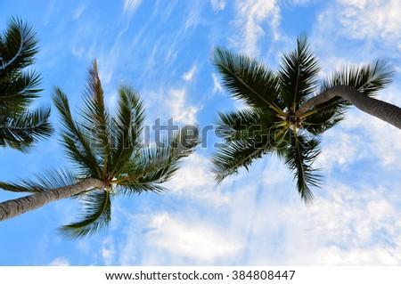 Palm trees and sky, view from below. Dominica - stock photo