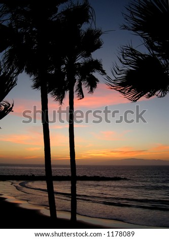 Palm trees and sunset - stock photo