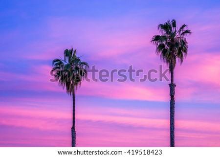 Palm trees at a beautiful sunset. - stock photo