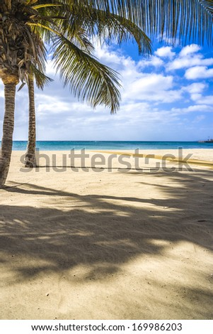 Palm trees at a tropical beach in Arrecife - Lanzarote - Spain  - Europe - stock photo