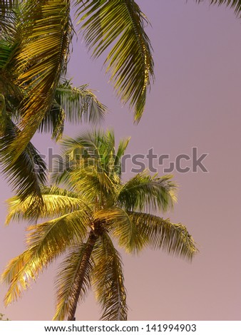 Palm trees at dusk on a tropical island - stock photo