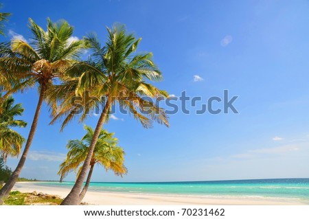 Palm trees at Paradise Beach - stock photo