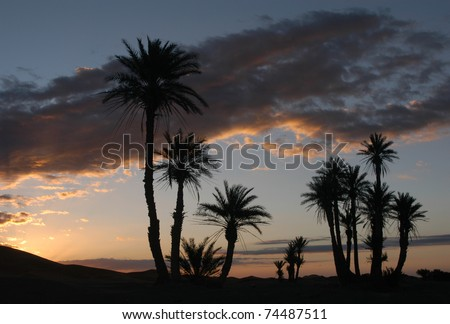 Palm trees at sunrise in the sand dunes of Erg Chebbi in the Sahara Desert, Morocco. - stock photo