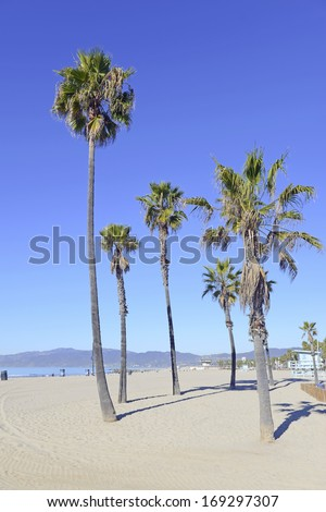 Palm Trees at the Beach - stock photo