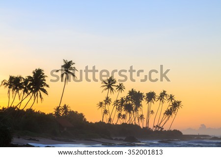 Palm trees at the beach at sunset in Sri Lanka - stock photo