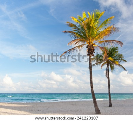 Palm trees at the beach in Miami Florida USA, on a beautiful summer day with blue sky and ocean in the background - stock photo