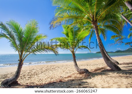 Palm trees at tropical Palm Cove beach in north Queensland, Australia - stock photo
