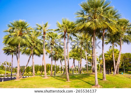 Palm trees decorate in garden - stock photo