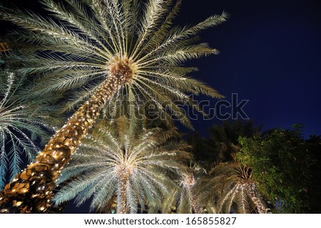 palm trees decorated with Christmas garland night - stock photo