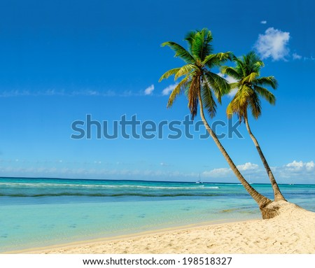 Palm trees entering the ocean on sandy exotic beach - stock photo