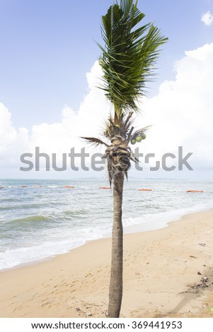 Palm trees grow on pleasure to the people having a rest and bathing ashore - stock photo