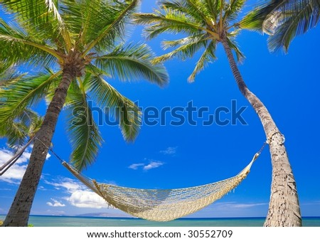 Palm Trees, Hammock, and Blue Sky, Beautiful Tropical Vacation - stock photo
