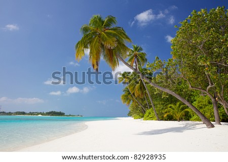Palm trees hanging over a sandy white beach with stunning blue waters, Meeru Island, Maldives - stock photo