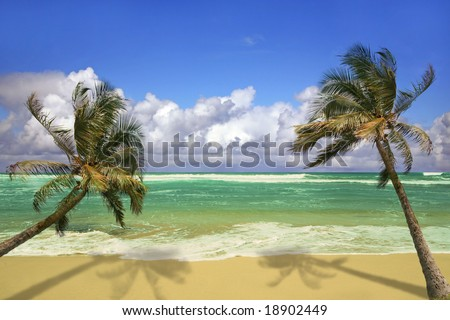 Palm Trees Hanging Over a Sandy White Beach with Stunning Turquoise Waters in Hawaii - stock photo