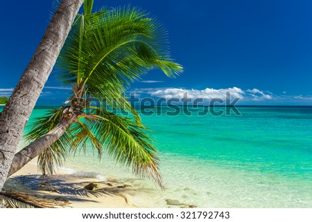 Palm trees hanging over tropical beach on Fiji Islands - stock photo