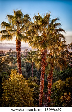 Palm trees in a garden oasis. Toned for a slightly retro moody feeling. Location: Marrakech, Morocco - stock photo