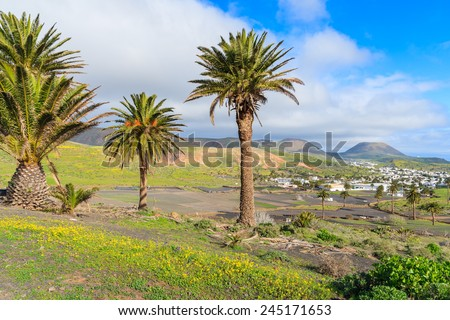 Palm trees in Haria mountain village, Lanzarote, Canary Islands, Spain - stock photo