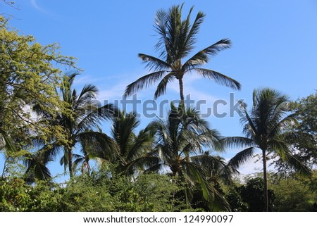 Palm Trees in Hawaii - stock photo