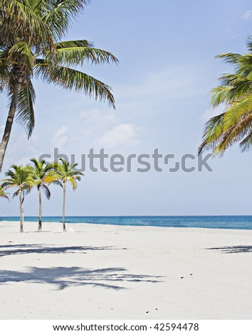 Palm trees in Miami Beach Florida - stock photo