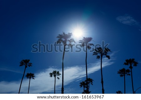 Palm trees in southern California Newport area with sun glowing - stock photo