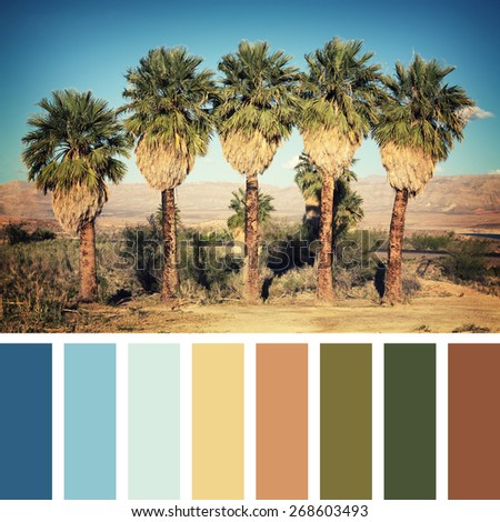 Palm trees in the desert, Nevada, USA. Instagram retro style processing, in a colour palette with complimentary colour swatches - stock photo