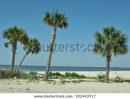 Palm trees in the sand at the edge of the Gulf of Mexico at Biloxi Beach - stock photo