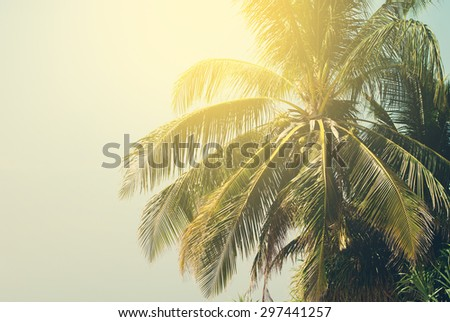 Palm Trees lit by the Sun on Tropical Beach. Toned  Background under Retro for Travel Design. Holiday Card - stock photo