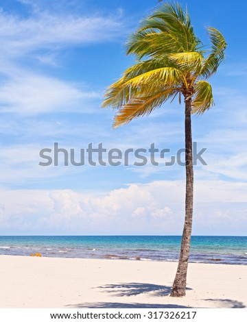 Palm trees on a beautiful sunny summer afternoon in Miami Beach Florida with ocean and blue sky in the background - stock photo