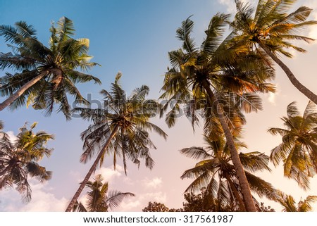 Palm trees on a warm sunny day at sunset, with warm toning - stock photo