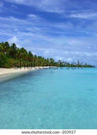 Palm Trees on Beach - stock photo