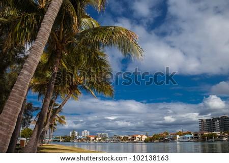 Palm trees on Budds Beach, Gold Coast, Queensland, Australia - stock photo