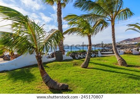 Palm trees on coast of Lanzarote island in Playa Blanca holiday village, Canary Islands, Spain - stock photo