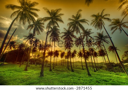 Palm Trees on Sunset - stock photo