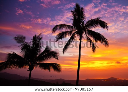 Palm Trees Background Vertical Palm Trees on The Background