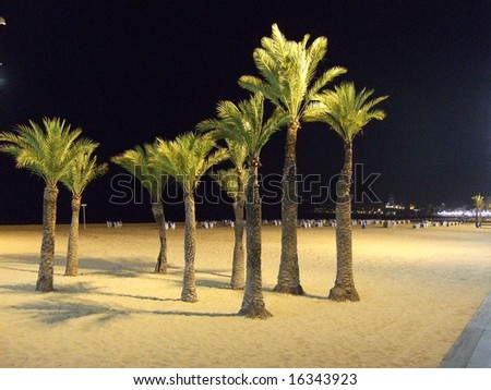 palm trees on the beach at night - stock photo