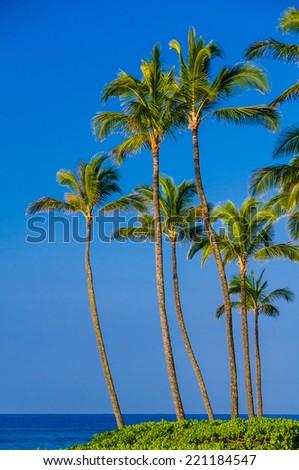 Palm trees on the shoreline of the Pacific Ocean, Kauai, Hawaii, USA - stock photo