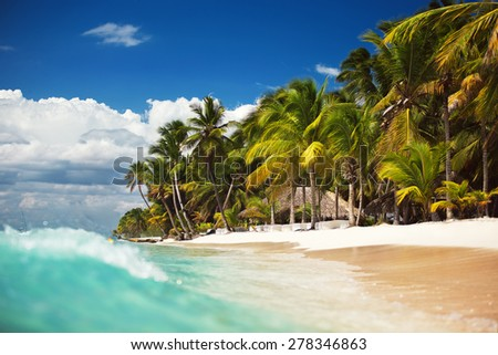Palm trees on the tropical, wild beach - stock photo