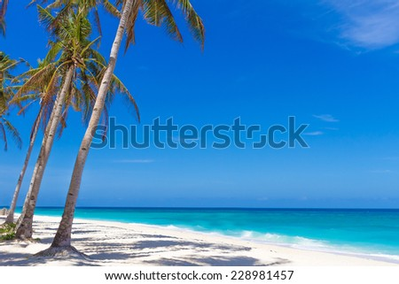 palm trees on tropical beach and sea background, summer vacations - stock photo