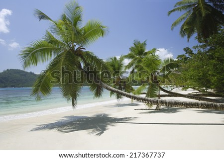 Palm trees over beach, Anse Takamaka, Mahe', Seychelles - stock photo