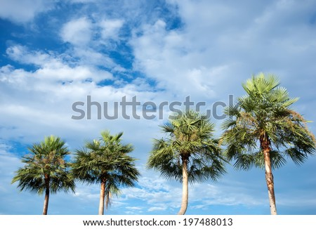palm trees over blue sky with cloud - stock photo