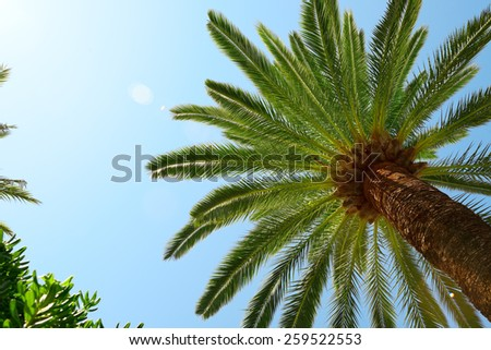 Palm Trees - Perfect palm trees against a beautiful blue sky  - stock photo