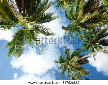 Palm trees seen from the ground in Koh Samui - Thailand - stock photo